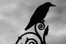 Corvidophilia / My love for Ravens, Crows, Blackbirds, and other black bird species... / by Kira McCoy Slye