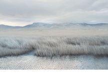 Landscape / by Paula Remolà