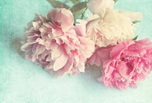 such pretty flowers / by Sarah Gardan