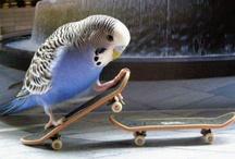 Soooooooo Cute! (Birds) 1 / by Asako Kayumi