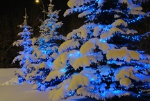 Winter Wonders / by Tammy Woodall