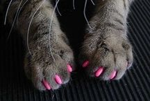 For The Furry Ones / Pet ideas. / by Samantha Perry