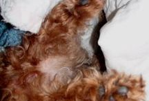 Bella {a dog's story} / by Redhead Riter
