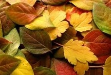 Fall Colors / by Bedding.com