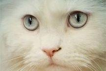 Kittys / by Kristen Hahn-Sassy