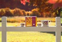 Tea Shop   Fall 2014 / Steep into fall with our limited edition collection of seasonal teas, gifts and tea-making accessories. / by DAVIDsTEA