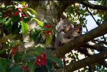 Squirrel Sightings  / by Radford University