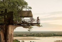 Tree House / by Christy Elsholz