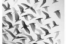 Illustrations-Animals / by David Prenoveau