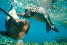 Travelling to the Galapagos Islands / Travel to the Galapagos Islands with G Adventures! / by G Adventures
