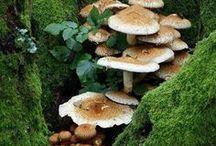 Mushroom Magic / by Penny Faragher