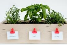 Plants, Garden, Patio / by Kelsey Rusnell