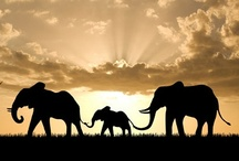 Elephants <3 / by Mylene Perez
