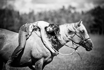 Horses / by Devon Page