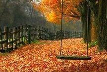 ~ Enchanting Fall ~ / Fall ~ Autumn ~ My favorite season! / by Rebecca Doerflinger