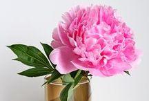 Flowers / by Francoise Lavergne