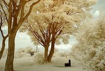 The Endless Winter / by ❈Agnès ❧ Brun❈