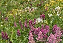 Meadows / by Ladybug Wreaths, Nancy Alexander