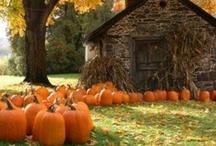 I Love Autumn / by Dorann Weber