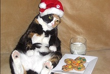 Cats Having a Bad Holiday / by PEOPLEPets.com