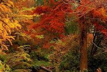 Fabulous Fall / by Robyn Frandemo