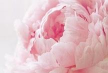 greenly / by Sara-Leina Hutson