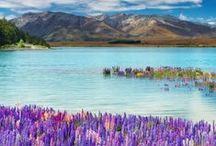 NZ / by K is for Kani (Connie Cao)