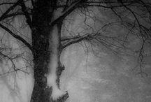 Winter / by Goldberry C.