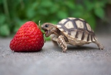 Turtles / by Diane Bradley