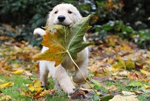 Fall's magic / by Bella