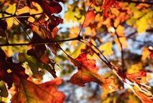 Autumn / by Courtney Kassbaum