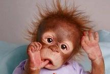Orangutan / by Gail Malec
