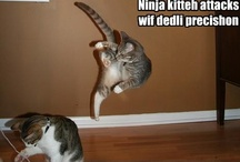 Ninja Cat / by Alan Shimp