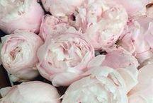 Rose Tea / Ahhh Paris and Rose Tea / by Jacque Reid