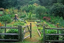 garden and outdoors / by Julie Kohler