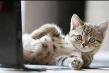 | kitty cats | / by Cheryl Haseman