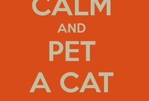 All about cats / ... and other fluffs / by MamaSaVa