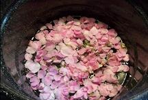 Rose & Rosehips / by Wildcraft Vita
