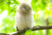 OWL Always Love You / by Jennifer Thompson