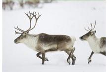 25 Days of Giving / NRDC BioGems has gift ideas all December long for you! / by NRDC BioGems