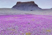 Wildflowers / Check out these beautiful wildflower photos! Mother Nature is quite the gardener! / by NRDC BioGems