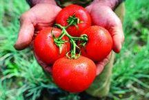 World Food Day 10-16-13 / by NRDC BioGems