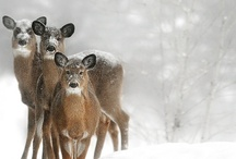 Winter Wonderland / by NRDC BioGems