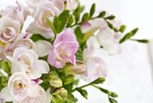 Flowers & Bouquets / by Zlatina Gocheva