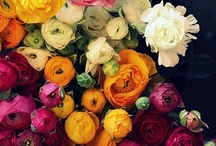Favorite Blooms!!! / by Gina Allred