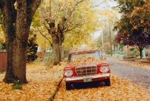 Seasons-Autumn / by Kristin Michael