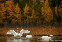 Autumn in Alaska / Pictures of all the wonders of the Alaska fall season / by Alaska Travel