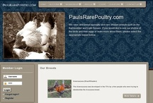 """Poultry Accessories 4-$ale / Post your (Chicks, Chickens, Turkeys, Pheasant, Peafowl, Ducks...) Accessories (ONLY) here. Remember to put a $ sign in front of the asking price(s) Please leave Details. Item Description and how to Contact You. """"ABSOLUTELY NO SPAM"""" or DELETE Happens! / by PaulsRarePoultry.com"""