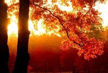 Autumn / by Amanda Stavrakis