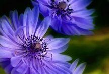 Fleurs / by Susan DeLucca